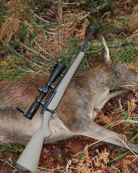 Despite the rain, soggy ground and thick vegetation the Predator was all you need to cull hinds, it