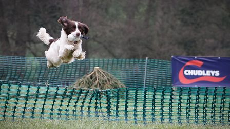 Working dogs require a nutritionally balanced diet to perform at their best