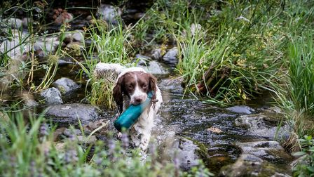 What you feed your dog is largely dependent on their workload