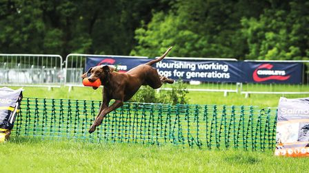 Chudleys offers a range of premium diets for working dogs