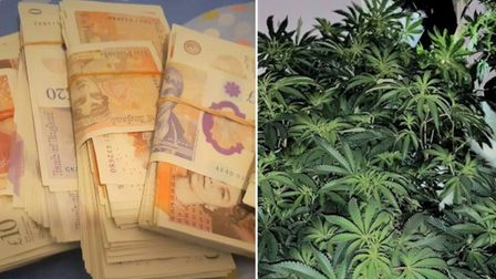 Cannabis factory, £7,600 in cash and fake ID documents uncovered during police raid in Tinkers Drove, Wisbech