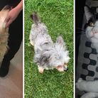 The 'Miracle 9' pets were saved by Ravenswood Pet Rescue earlier this month.