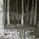 A thermal image of two squirrels by some trees at 65 yards