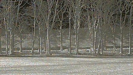 Thermal image of a line of trees, with a squirrel in one of them