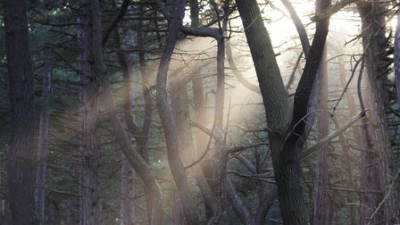 Its Magical, seeing the sunbeams through the trees in Wells Woods.