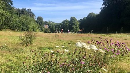 Wildflower meadow at Stoodley