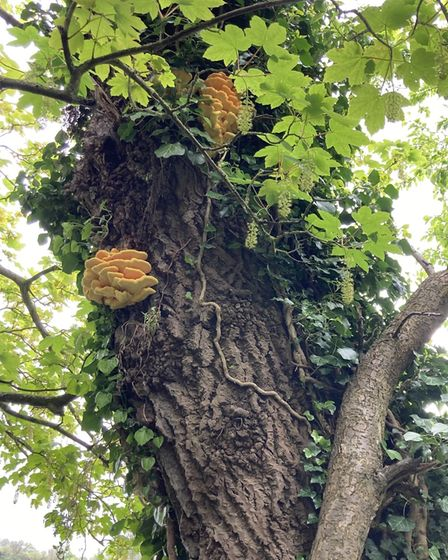 Dorothy Smith took her photograph of fungi in The Thicket in St Ives.
