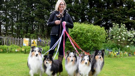A woman with five, big, very fluffy dogs!