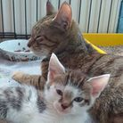 A recue cat and kitten