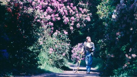 Walking through the rhododendron at Sheringham Park in1994.