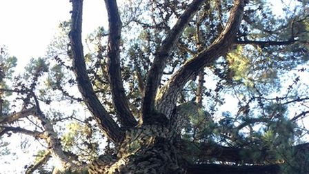 Looking up at a blue sky through the branches of a tree can sometimes help put things in perspective