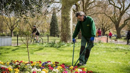 Park officer tends to a London Field flower bed.