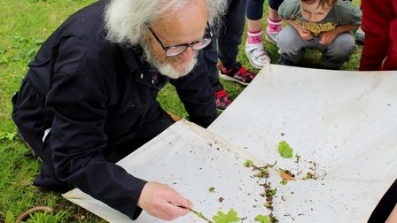 A man with white hair, glasses and dark blue overalls looks closely at a collection of oak tree leaves