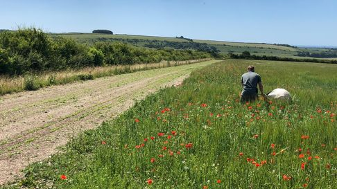 a hedge, field margin and wild flower field with a man sowing seeds