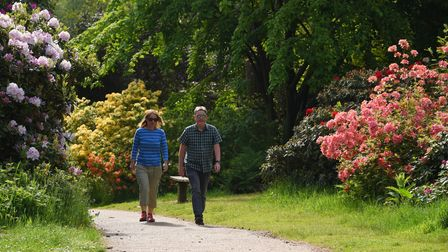 The rhododendrons in full colour at Sheringham Park. Picture: DENISE BRADLEY