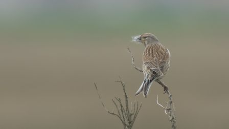 Frederic Landes' photoLinnet Nest Building was among the outstanding entries in North Norfolk