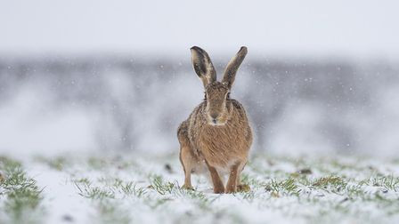 Paul Richards' Brown Hare in a Blizzardwas among the outstanding entries in North Norfolk