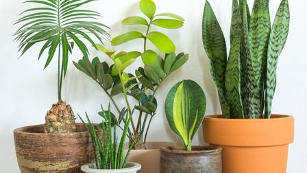 Ahouseplant subscription gift.