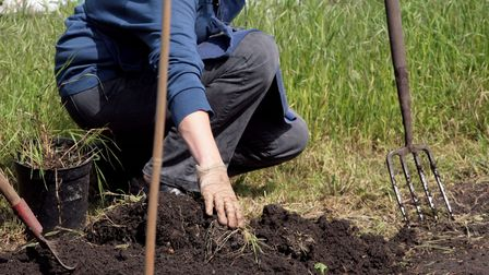 A woman working on her allotment at Fulham Palace Meadows, South West London.