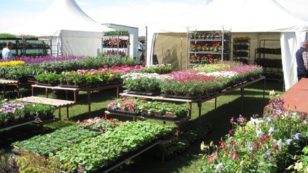 Plants for sale at the Hertfordshire Garden Show.
