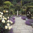 The Golden Rose Walk at Chartwell created in 1958 for Winston & Mrs Churchill to commemorate their G