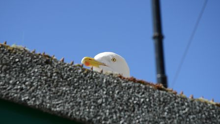 A seagull sits on a roof