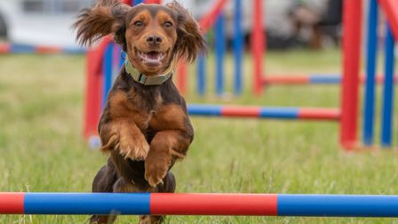 DogFest returns to Knebworth House from May 2 to May 3, 2020. Picture: Louise Farrell