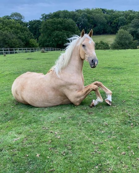 Samantha Marsh sent us this image of her young horse called Zebedee.