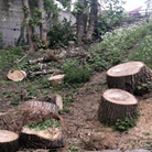 The Ham&High went to the Parkland Walk to count the number of trees recently felled