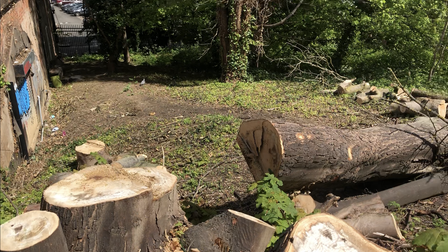 Haringey Council has clashed with community groups over exactly how many trees have been felled