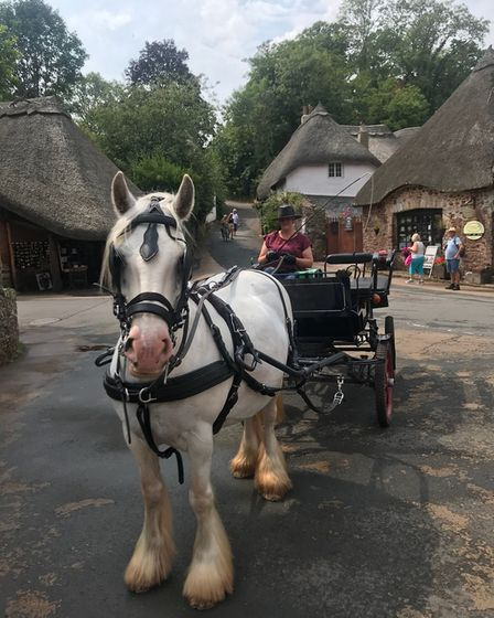 Cockington's famous horse and carriage