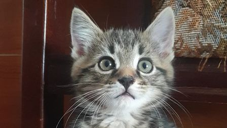 Cats can have up to three litters a year