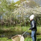 Pond dipping at Stock Way North Nature Reserve