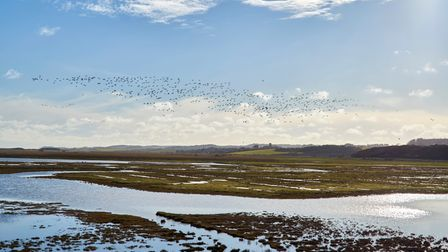 Norfolk Wildlife Trust's first nature reserve at Cley Marshes