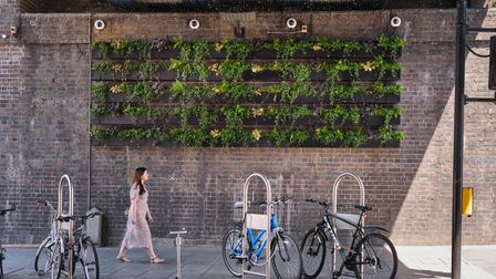 living wall feature in five rows