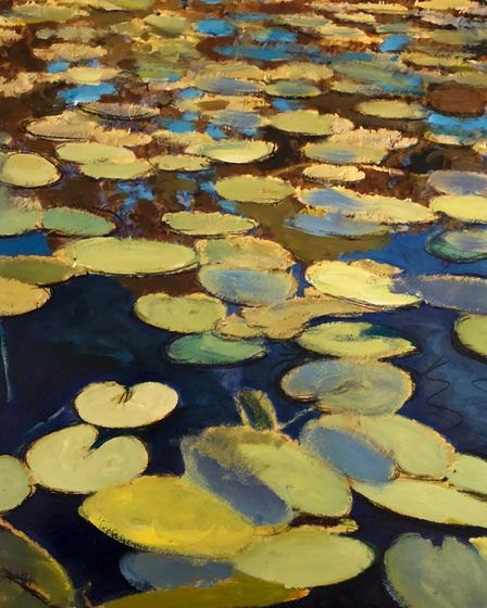 Golden waterlily leaves on a dark blue pond surface