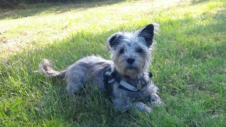 Sandra Brazier took this picture of her dog Mabel.
