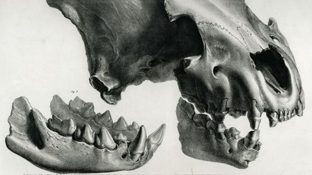 Father MacEnery's plate showing a hyaena skull donated by Vivian.