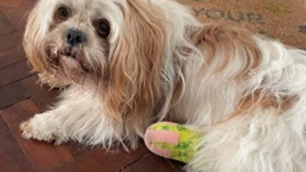 Snowie the Shih-Tzu was attacked in Regent's Park in May
