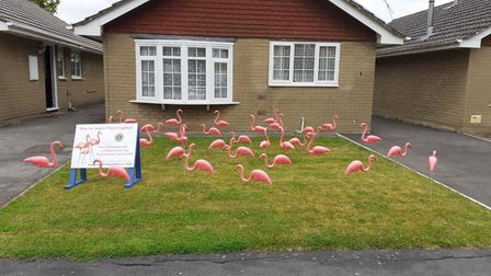 A flock of 30 plastic birds have appeared in gardens across Portishead.
