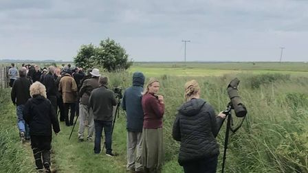 Bird watchers on the look out for rare bee-eaters in Great Yarmouth.