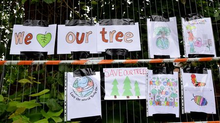 Children from nearby Highgate Primary have created artwork supporting the lime tree in North Hill Avenue