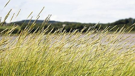 North Somerset council plan to add long grass and trees as part of their rewilding scheme.