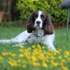 Ian Morrison, from Eaton Socon, sent us this photo of his dog Marley who is 11.