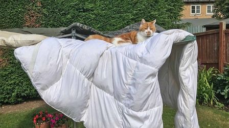 Peter Turner sent this image of his cat Marmalade sunning himself in his favourite spot.