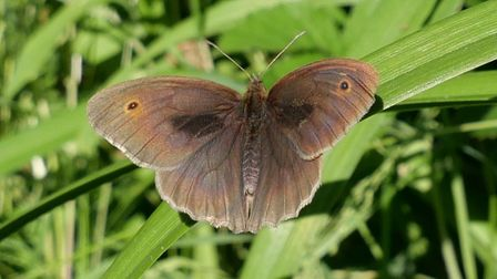 A free butterfly walk is talking place at Fryent Country Park on July 3