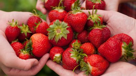 Head out to one of these pick your own farms in Kent for fresh strawberries and other delicious fruits and vegetables
