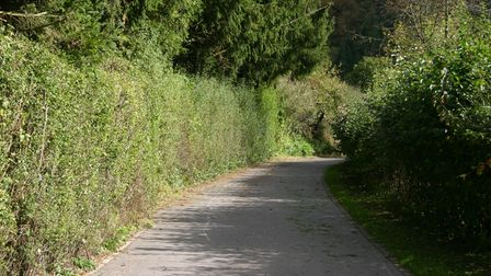narrow country lane with high hedges on both sides, turning a tight right corner at end of straight stretch of road