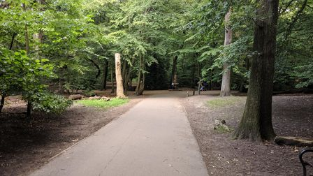 Highgate Wood. Picture: Sam Volpe