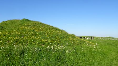 Barrows and cows on the South Dorset Ridgeway
